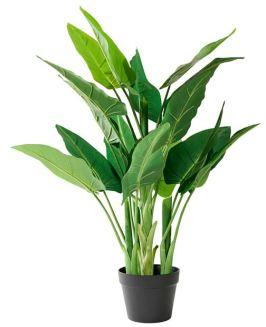arum-plante-aquatique-vert-h-88-cm