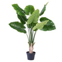 filo-philodendron-vert-h-90-cm