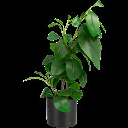 plante-buisson-26478142-f-1